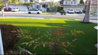 Photo of artificial lawn front yard with a palm tree, Whittier CA
